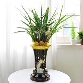 [인사이동 추천] 꽃이 풍성하게 피어있는 동양란 꽃배달하시려면 이미지를 클릭해주세요