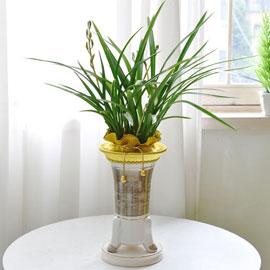 [인사이동 추천] 은은한 꽃향기가진 고급 동양란 꽃배달하시려면 이미지를 클릭해주세요