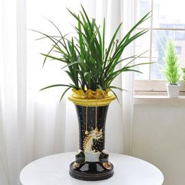 [인사이동 추천] 은은한 향기를 가진 풍성한 동양란 꽃배달하시려면 이미지를 클릭해주세요