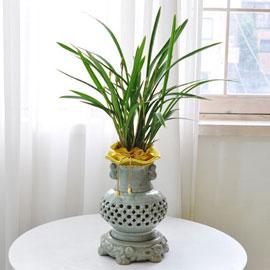 [인사이동 추천] 은은한 향기를 가진 동양란 꽃배달하시려면 이미지를 클릭해주세요