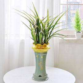 [인사이동 추천] 예쁜 꽃이 피어있는 고급동양란 꽃배달하시려면 이미지를 클릭해주세요