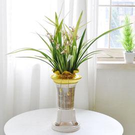 [인사이동 추천] 예쁜 꽃이 피어있는 동양란 꽃배달하시려면 이미지를 클릭해주세요