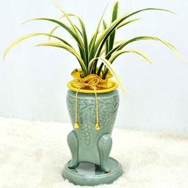 보내시는분의 품격!! - 플라워119 명품동양란 황금일향 꽃배달하시려면 이미지를 클릭해주세요