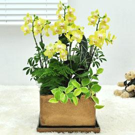 보내시는분의 품격!! - 플라워119 노랑미니호접란 꽃배달하시려면 이미지를 클릭해주세요