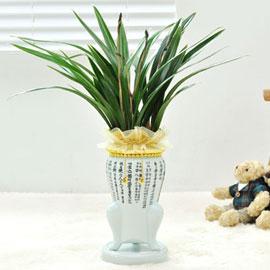 은은한 난꽃향을 가진 동양란 (* 화기 단종으로 변경) 꽃배달하시려면 이미지를 클릭해주세요