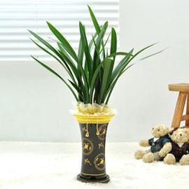 진한 난꽃향을 가진 동양란 꽃배달하시려면 이미지를 클릭해주세요