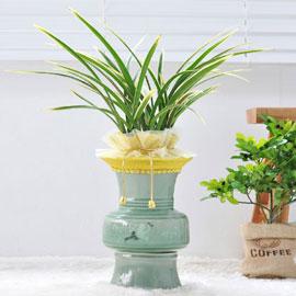 기품있는 난엽을 가진 名品동양란 - 금기(청색분) 꽃배달하시려면 이미지를 클릭해주세요