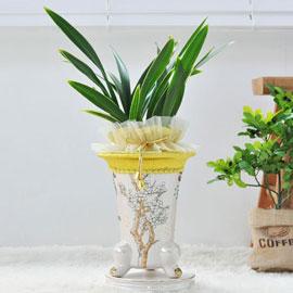 웅장한 난엽이 인상적인 동양난( 금봉금 ) 꽃배달하시려면 이미지를 클릭해주세요