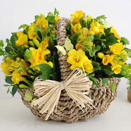 [서울,광역시배송] 겨울 꽃 연가 - 나비에게(계절마감) 꽃배달하시려면 이미지를 클릭해주세요