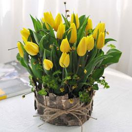 [서울배송]겨울 꽃 연가 - 내 마음(화기 품절시 변경) 꽃배달하시려면 이미지를 클릭해주세요