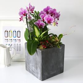 [인사이동추천] Office&Nature - 무늬가아름다운 썬뷰티 꽃배달하시려면 이미지를 클릭해주세요
