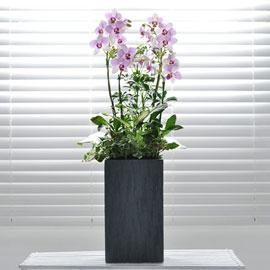 사각화기의 신비한 빛깔의 서양란(지방은 화기가 변경될 수 있습니다) 꽃배달하시려면 이미지를 클릭해주세요