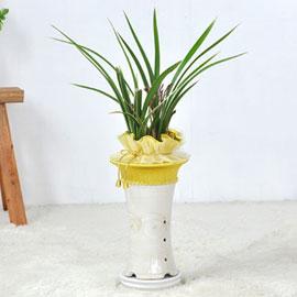 [인사이동추천] 짙은 향기의 난꽃을 피우는 동양란 꽃배달하시려면 이미지를 클릭해주세요