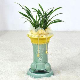 [인사이동추천] 옥빛 화기에 심은 대국 꽃배달하시려면 이미지를 클릭해주세요