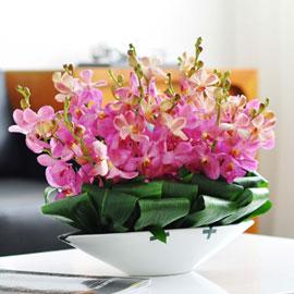 [서울배송] Living flower- Take Five(화기는 변경됨) 꽃배달하시려면 이미지를 클릭해주세요