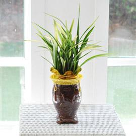 난엽이 아름다운 동양란- 살마금 꽃배달하시려면 이미지를 클릭해주세요