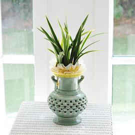 고급 동양란- 황룡관 꽃배달하시려면 이미지를 클릭해주세요