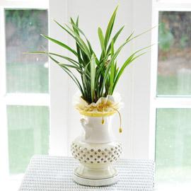 고급 동양란 - 황채   *화기 변동 될수 있습니다* 꽃배달하시려면 이미지를 클릭해주세요