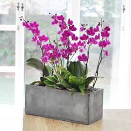 집안의 작은 정원 - 만천홍 꽃배달하시려면 이미지를 클릭해주세요
