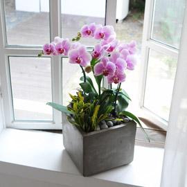 집안의 작은 정원 -연핑크호접 꽃배달하시려면 이미지를 클릭해주세요