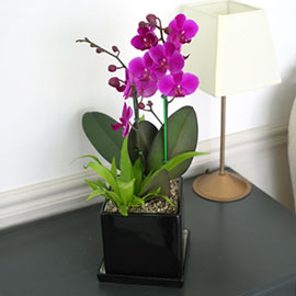 사각화기의 만천홍 꽃배달하시려면 이미지를 클릭해주세요