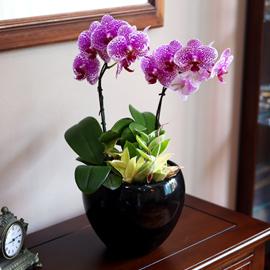 검정색 고급화기의 썬뷰티 꽃배달하시려면 이미지를 클릭해주세요