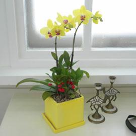 사각화기의 썬셋/뉴사각화기로 변경 꽃배달하시려면 이미지를 클릭해주세요