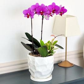 흰색 고급화기의 딜라이트 꽃배달하시려면 이미지를 클릭해주세요