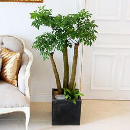Office&Nature - FRP화분의 해피트리大 꽃배달하시려면 이미지를 클릭해주세요