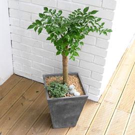 Office&Nature - FRP화분의 해피트리小 꽃배달하시려면 이미지를 클릭해주세요