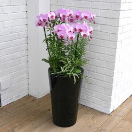 Office&Nature - 고운 자태 뽐내는 루치아핑크 꽃배달하시려면 이미지를 클릭해주세요