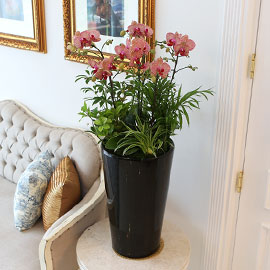Office&Nature - 무늬가 매력적인 브라더걸 꽃배달하시려면 이미지를 클릭해주세요
