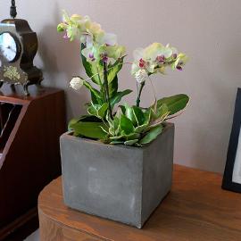 Office&Nature - 싱그러운 그린베어 꽃배달하시려면 이미지를 클릭해주세요