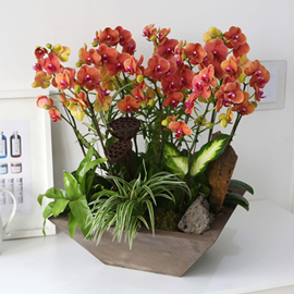 Office&Nature - 고급스런 오렌지빛 미니호접 꽃배달하시려면 이미지를 클릭해주세요