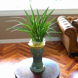 Office&Nature - 매혹적인 향기를 가진 옥화 **화기변경** 꽃배달하시려면 이미지를 클릭해주세요
