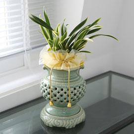 투각화기에 심은 환희 꽃배달하시려면 이미지를 클릭해주세요