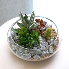 [수도권배송] 공기정화식물 - 유리화병의 다육정원 꽃배달하시려면 이미지를 클릭해주세요