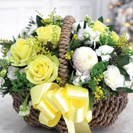 [서울배송] Winter Wonderland - Lemon Tree 꽃배달하시려면 이미지를 클릭해주세요