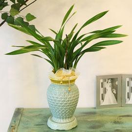 겨울동양란 금봉금A 꽃배달하시려면 이미지를 클릭해주세요