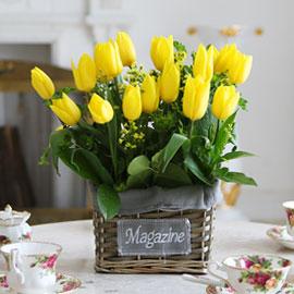 [서울배송] Spring & Sweet - 따스한 봄날 꽃배달하시려면 이미지를 클릭해주세요