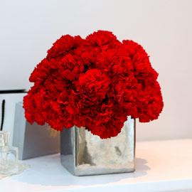 [서울배송] Modern Carnation 꽃배달하시려면 이미지를 클릭해주세요