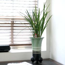 [서울배송]수경동양란 - 투톤화기의 철골소심 꽃배달하시려면 이미지를 클릭해주세요