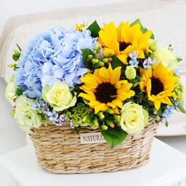 sunflower - di santorini(디 산토리니)-겨울에는 해바라기 대신 다른꽃으로 대체 꽃배달하시려면 이미지를 클릭해주세요