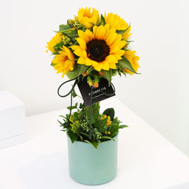sunflower - sunflower topiary (*일부지역 화기변동) 꽃배달하시려면 이미지를 클릭해주세요