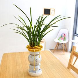 아름다움이 있는 공간 - 철골소심(*화기 단종으로 다른 화기로 대체 배송) 꽃배달하시려면 이미지를 클릭해주세요