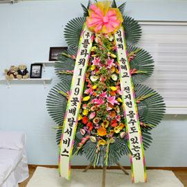축하화환-김태희 송혜교 전지현 올 수도 있는 집 꽃배달하시려면 이미지를 클릭해주세요