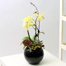 Office & Nature - 노랑미니호접과 다육 꽃배달하시려면 이미지를 클릭해주세요