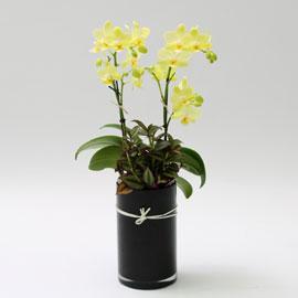 Office & Nature 봄의 노란 나비 꽃배달하시려면 이미지를 클릭해주세요