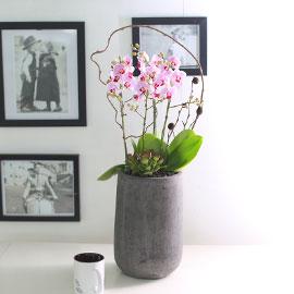 휴식이 되는 생활공간 - Smile moon_리틀잼 꽃배달하시려면 이미지를 클릭해주세요
