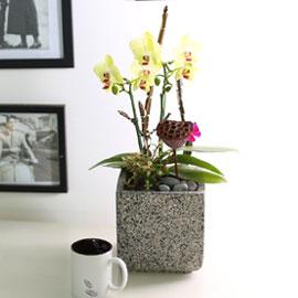휴식이 되는 생활공간 - Sunset_포춘 꽃배달하시려면 이미지를 클릭해주세요